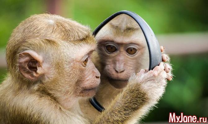 Как вести себя с обезьянками в экзотических странах?