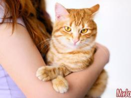 Интересные факты о домашних животных