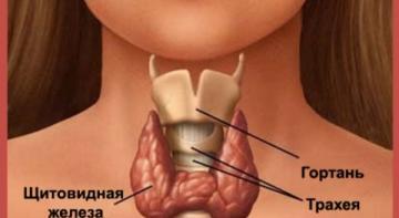 10 признаков проблем со щитовидной железой, о которых вы никогда бы не подумали